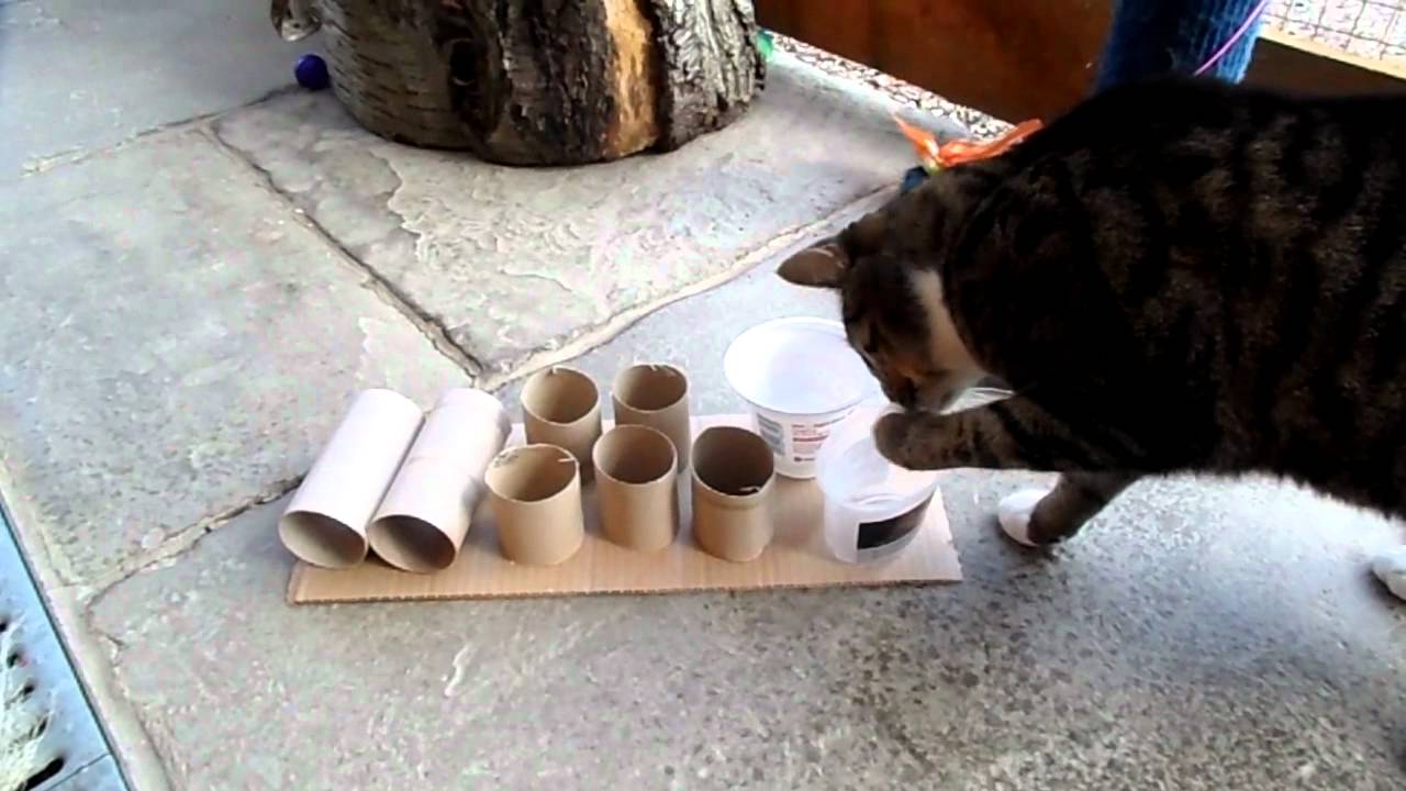 Cardboard Cat Food Dispenser