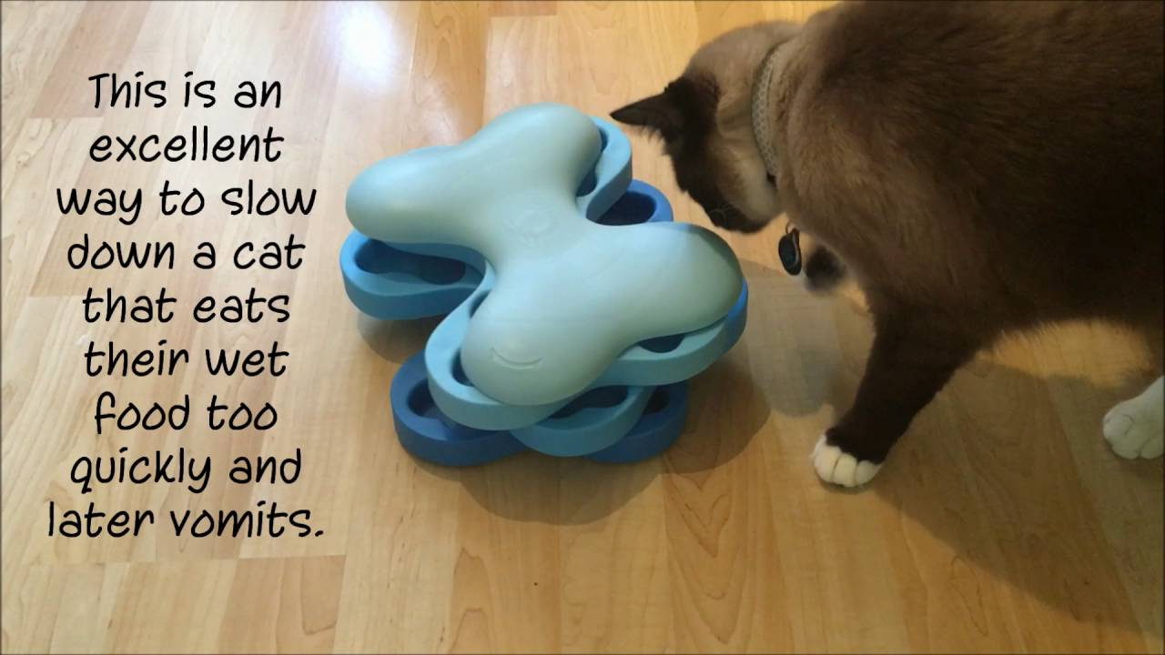 product floppycats feeder singlepod reviews innovative magnetic vote for next cat puzzle pet petfusion