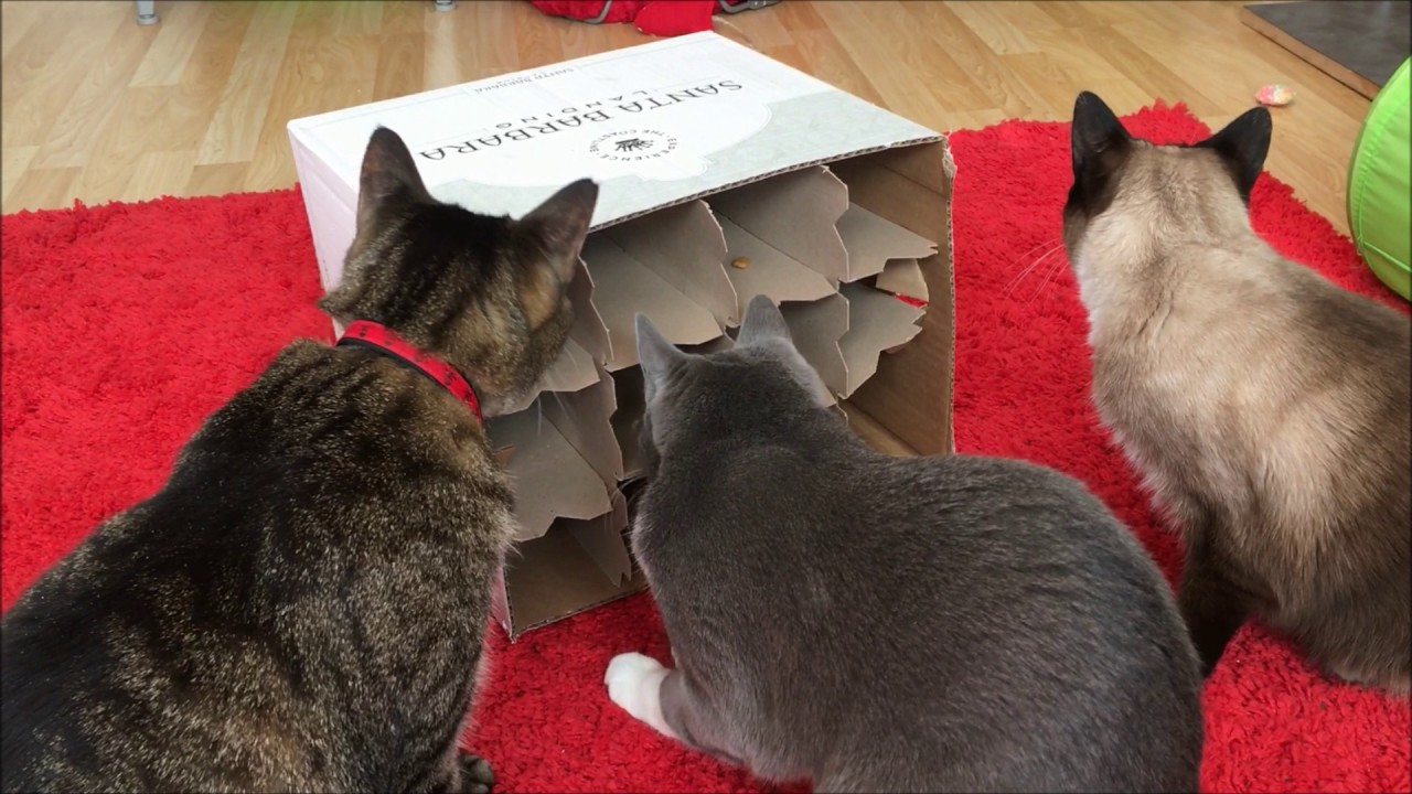 The Wine Box Food Puzzle Food Puzzles For Cats