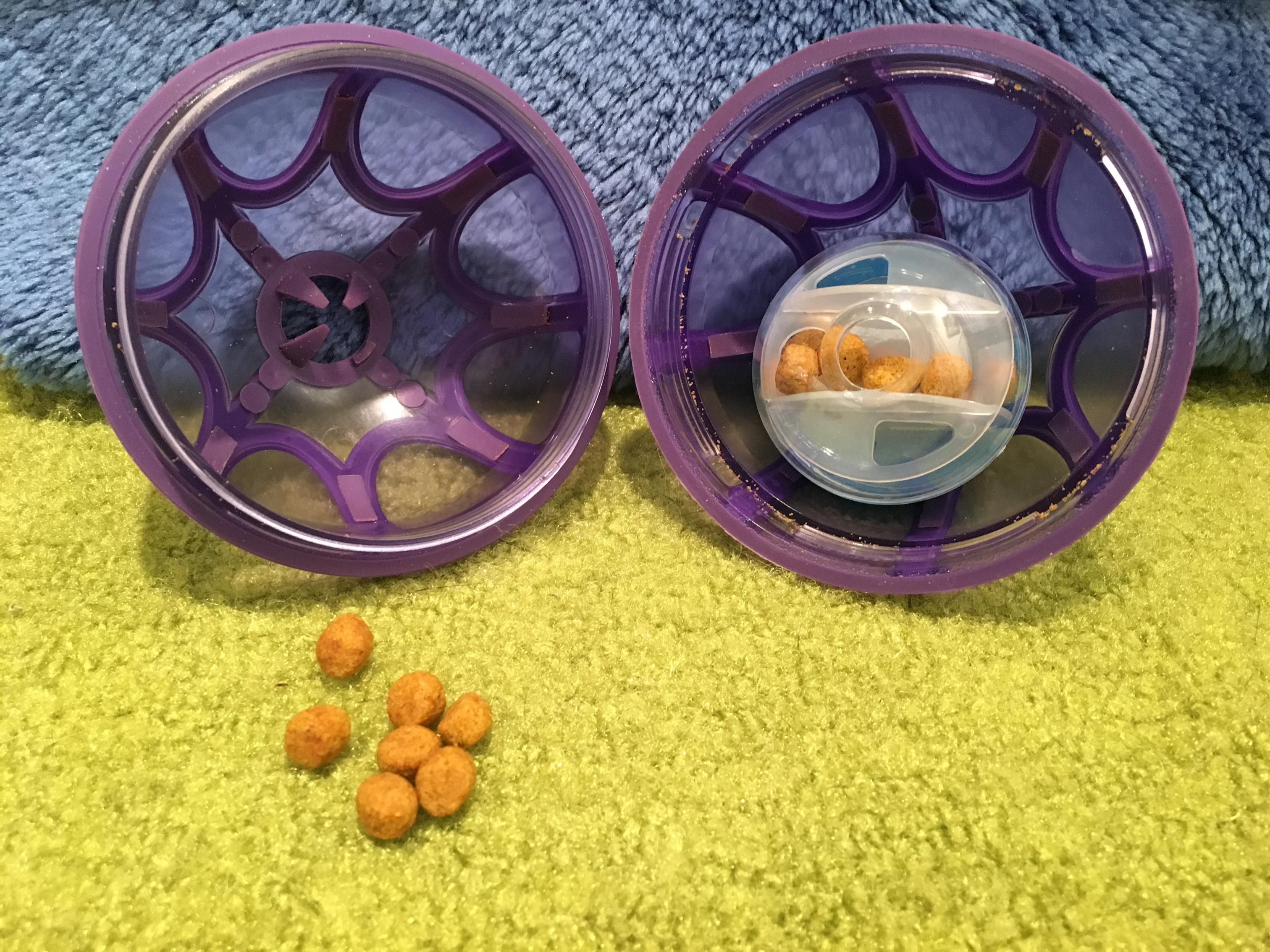 Add to the Busy Buddy Kibble Nibble foraging toy.