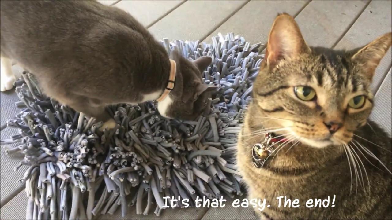 Cat Puzzles Wet Food