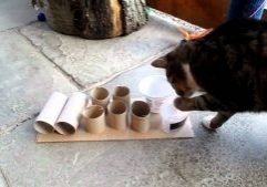 Cat-using-feeder-puzzle.MP4-1