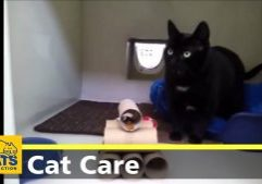 DIY-Cat-Feeding-Enrichment-1