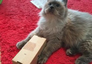 2. Fill with deliciousness and offer box to cat.