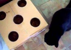 Stimulating-Cat-Food-Bowl-2