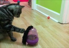 The-Kong-Wobbler-for-cats